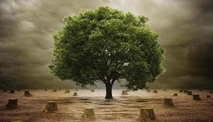 prophet Climate Tree